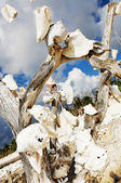 Dead tree with shells — Stock Photo