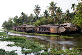 Backwaters Kerala — Stock Photo