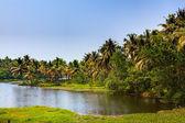 Backwaters of cochin — Stock Photo