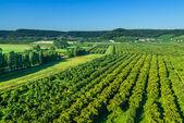 Ciruelo campos de lorena francia — Foto de Stock