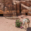 Donkey in nabatean city of petra jordan — Stock Photo #26707493