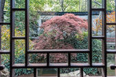 Red-leafed bonsai tree Yuyan garden shanghai china — Stock Photo
