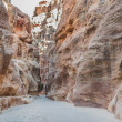 The siq path in nabatean city of  petra jordan — Stock Photo