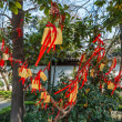 Paper prayer ribbons   and wishes Wen Miao confucius temple shan — Stock Photo