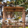 Stock Photo: Chinese birdcage gucheng park shanghai china