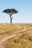 Trail and tree Masai Mara plais Kenya Africa — Stock Photo