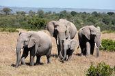 Bunch of elephants — Stock Photo