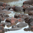 Stock Photo: Happy Hippopotamus