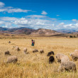 Stock Photo: Womshepherd peruviAndes  Cuzco Peru