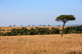 Plains Masai Mara reserve Kenya Africa — Stock Photo