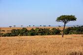 Plains Masai Mara reserve Kenya Africa — Stock Photo