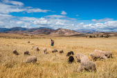 Woman shepherd peruvian Andes  Cuzco Peru — Stock Photo