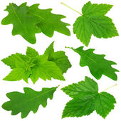 Collection of green leaves — Stock Photo