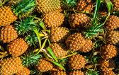 Pineapples — Stock Photo
