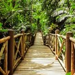 Wood bridge in the jungle — Stock Photo