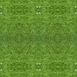 Stock Photo: Herbal seamless pattern.