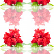 Stock Photo: Seamless rose pattern.