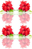 Seamless rose pattern. — Stock Photo
