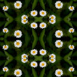 Stock Photo: Seamless floral camomile pattern.