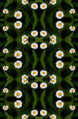 Seamless floral camomile pattern. — Stock Photo
