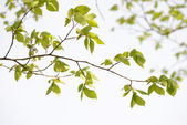 Bright sunny tree branch — Stockfoto