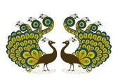 Two peacocks — Stock Vector
