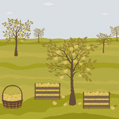 Orchard with apple trees — Stockvektor