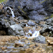 Waterfalls of Goredale Scar — Stock Photo