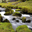 Stock Photo: Stream in Field