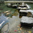 Stock Photo: Stepping Stones