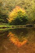 Fall Reflections — Stock Photo