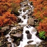 ������, ������: Fall River