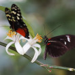 Stock Photo: Two Butterflies