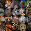 Wild Zoo Animal Squares — Stock Photo