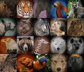 Wild Zoo Animal Squares — Stock Photo