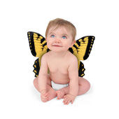 Little Cute Baby Butterfly on White Background — Stock Photo