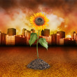 Stock Photo: City Destruction with Nature Sunflower Growing
