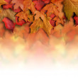 Red Orange Fall Leaves Background Border — Stock Photo #15656619