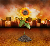City Destruction with Nature Sunflower Growing — Stock Photo