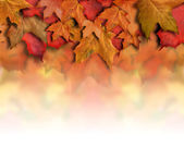Red Orange Fall Leaves Background Border — Stock Photo