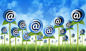 E-mail internet inbox flores brotando — Fotografia Stock