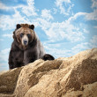 Wild Bear Mammal on Cliff with Clouds - Stock Photo