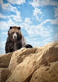 Wild Bear Mammal on Cliff with Clouds — Foto de Stock