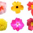 Colorful Flower Pack on White - Stock Photo