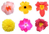 Colorful Flower Pack on White — Stock Photo