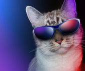 Cool Party Cat with Sunglasses — Stock Photo