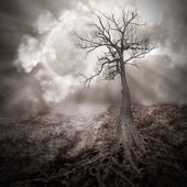 Lonely Tree with Roots Holding The Moon — Stock Photo