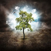 Lonely Tree of Hope on Dry Land — Stock Photo