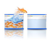 Gold Fish Moving to Better Website — Stock Photo