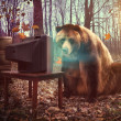 Lonely Bear Watching Television in Woods — Stock Photo #45919247